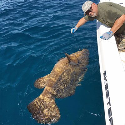 Man Caught Grouper on the Cape Canaveral Fishing Charter