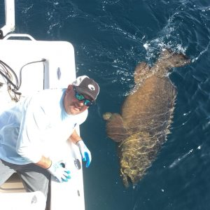 how much does a grouper weigh, man leaning off of boat with grouper in the water